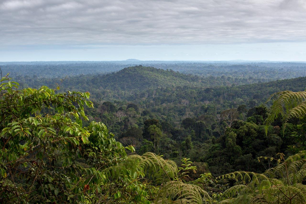 Floresta Nacional de Carajás, Pará, Brasil. Flavio Forner/XIBÉ